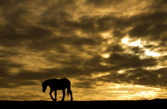 Horse van Anne Koop