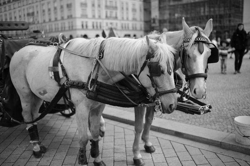 Paarden in Berlijn van Rob van Dam