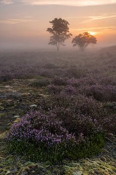 Lever du soleil à Zuiderheide