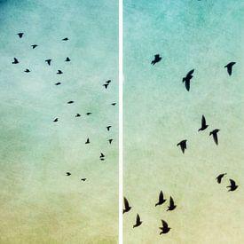 vogels van Claudia Moeckel