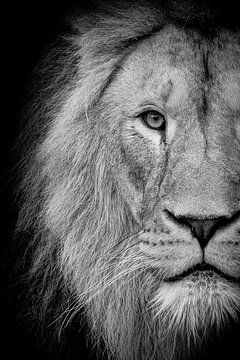 Leeuw op zwart van Janine Bekker Photography