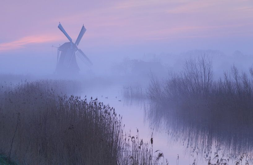 Early birds van Sander van der Werf