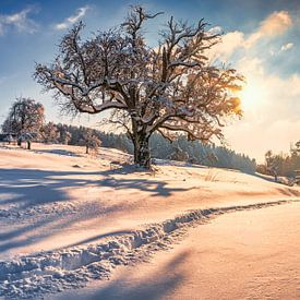 Paysage d'hiver sur MindScape Photography