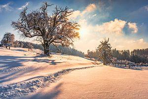 Winterlandschap van MindScape Photography