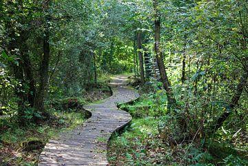 Avontuurlijk vlonderpad door rustgevend bos  van T. Berrevoet