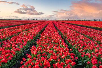 Rotes Tulpenfeld von Jeroen Schouten