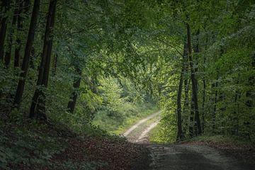 het bos uit van ina van zandwijk