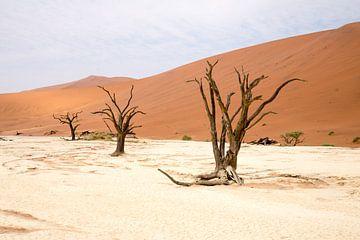 Tiefes Tal, 3 Bäume von Leo van Maanen