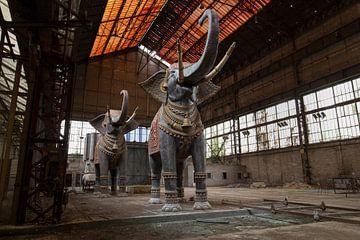 Eléphants de cirque sur Kristof Ven