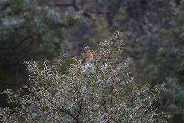 Snelle Vogel von Koos Koosman