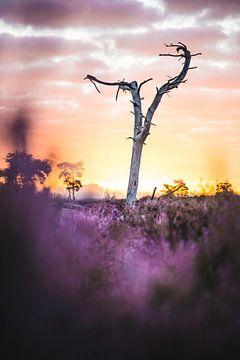 Sonnenaufgang auf der Heide von Abby's Voyage