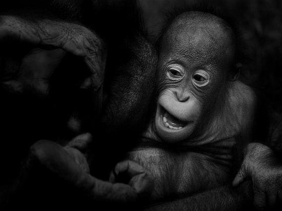 Orang-oetan Baby van Ruud Peters