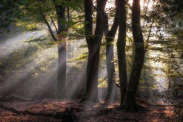 Zonneharpen van Jeroen Linnenkamp
