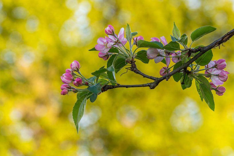 Frühling, Blüte und Bokeh von John van de Gazelle