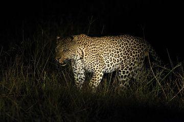 Leopard von Robert van Brug