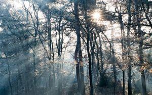 Ontwakend bos van