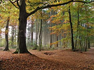 Kleuren van de Herfst van Femke Vergeer