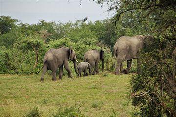 Olifantenfamilie van Marije Zwart