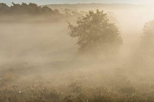 verborgen bomen in de mist