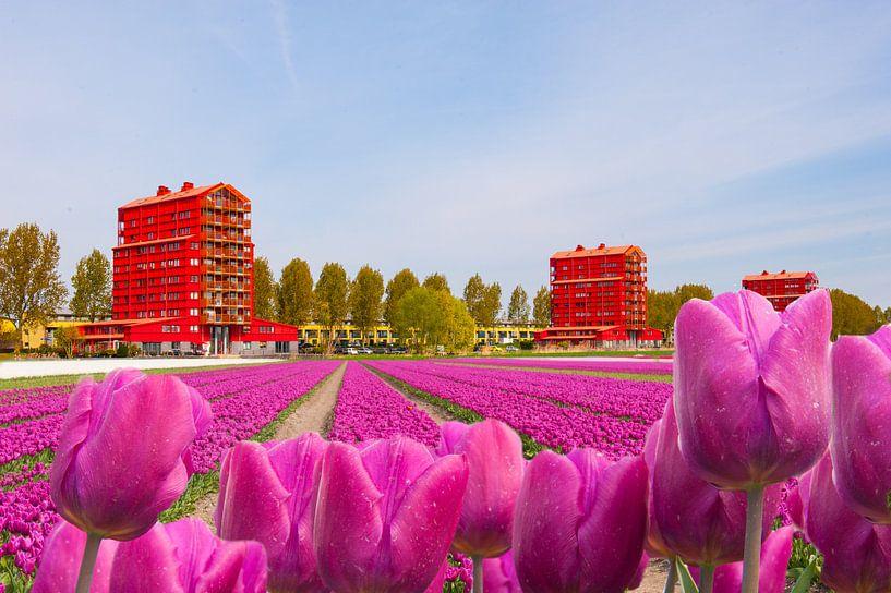 Tulips From the Netherlands(Holland) van Brian Morgan