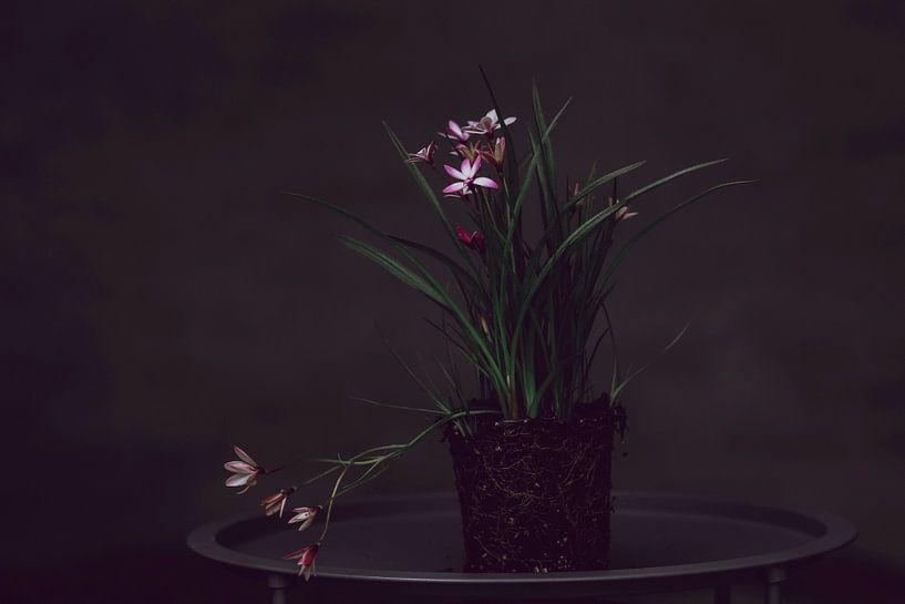 Nature morte sur Carla Van Iersel