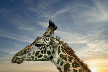 Knorrige giraffe van pixxelmixx