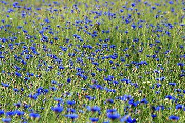 Korenbloemenveld von Sandra van Vugt