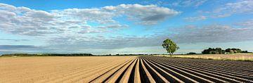 Aardappelrijen in Groningen van Bo Scheeringa Photography