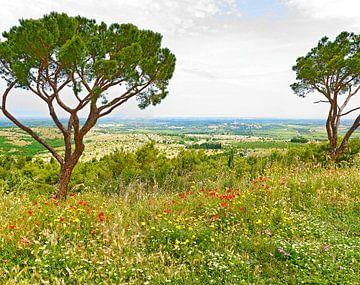 Apulië in het voorjaar van Leopold Brix