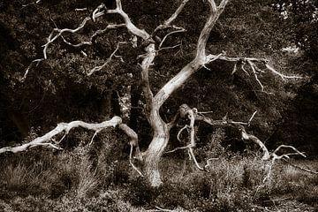 Het skelet van een dode boom van Ron Poot