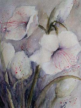 Witte Amaryllis van Christine Nöhmeier