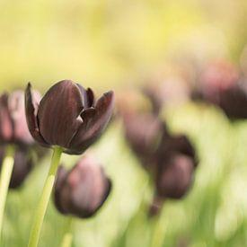 Dromen over de pracht van lente.  van Sungi Verhaar