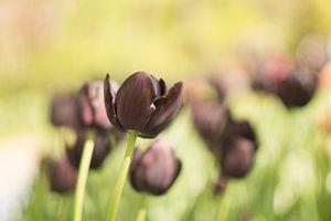 Dromen over de pracht van lente.  van