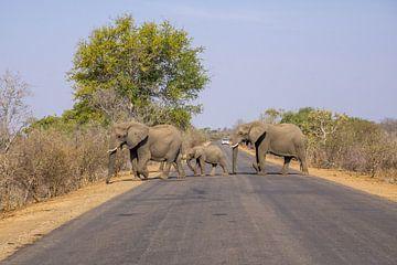 Olifanten steken de weg over in Zuid-Afrika van Reis Genie
