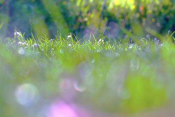 Summer groen von Marianna Pobedimova