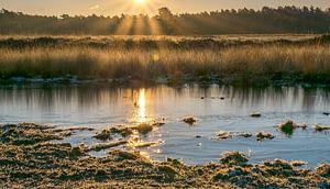 zonnestralen van Pierre De bresser
