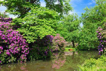 Marvellous Rhododendron van Gisela Scheffbuch