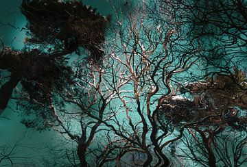 Kronkelende bomen van FotoNederland / Henk Tulp