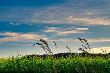 Wiesenlandschaft von Miroslav Plahusch
