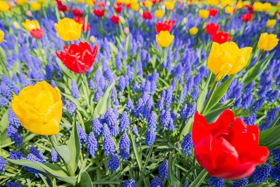 Red and yellow tulips van Jelmer Jeuring