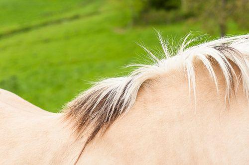 Abstracte foto van paarden rug en manen van