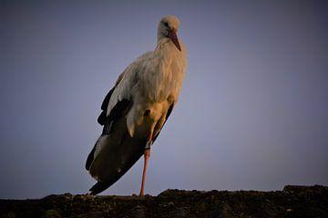 Frau Stork (2) von Michael van Eijk