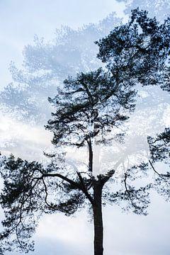 Dubbelbeeld boom nr. 3 sur Marjan van Herpen
