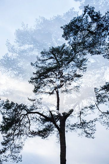 Dubbelbeeld boom nr. 3 van Marjan van Herpen