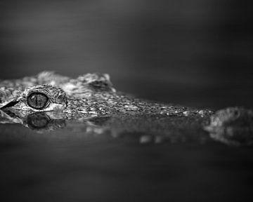 Krokodil mit Blick über das Wasser in schwarz-weiß von Patrick van Bakkum