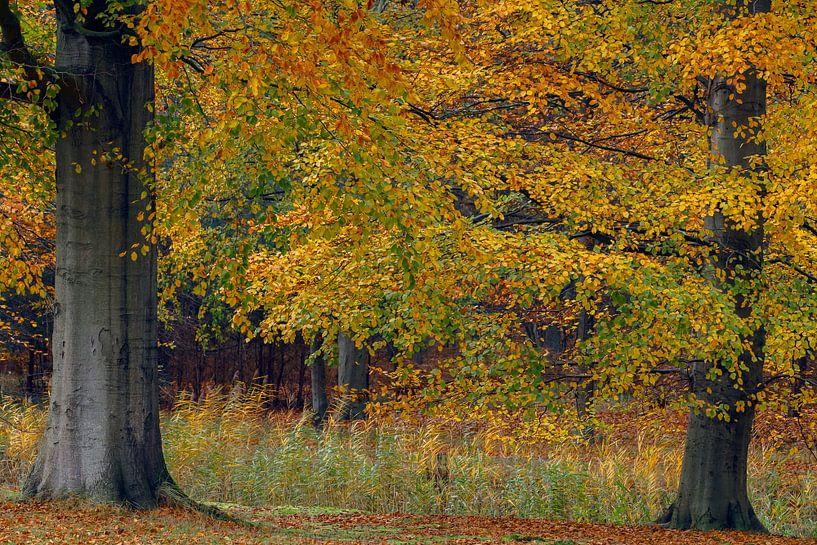 Herfstkleuren  van Menno Schaefer