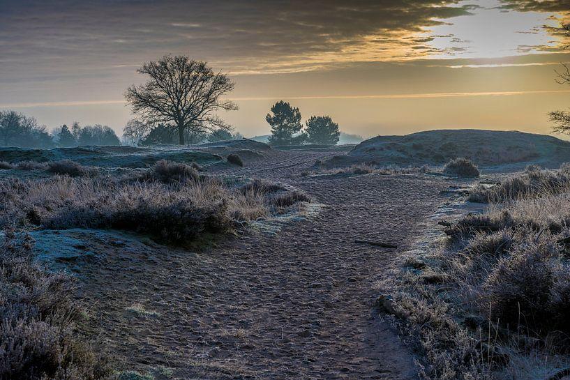 Zonsopkomst op Loonse en Drunense duinen van Edwin Werkhoven