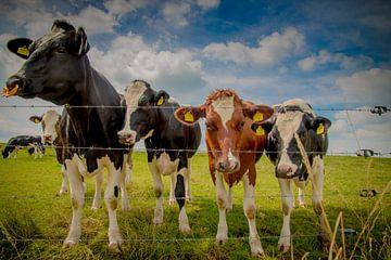Alle koeien in de wei von Kim Claessen