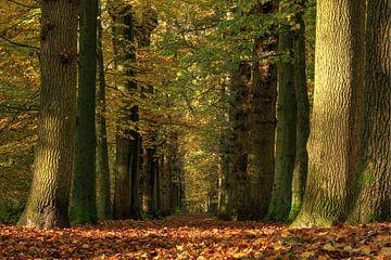 Allee im Herbstwald von FotoBob