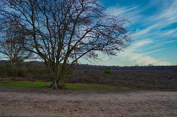 Une belle vue sur la bruyère sur Anniek de Kruijf